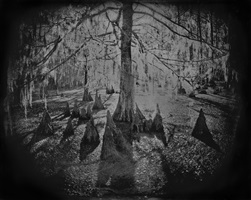 cypress swamp study #1 by keith carter
