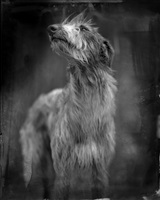bog dog by keith carter