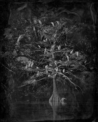 nesting tree by keith carter