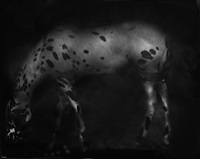 leopard appaloosa by keith carter