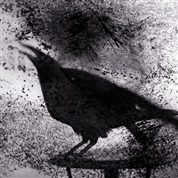 raven on table by keith carter