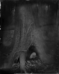 tree roots by keith carter