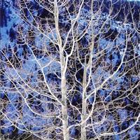 glowing winter aspen, colorado by christopher burkett