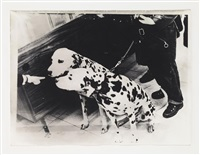untitled, dalmatian dogs by sigmar polke