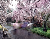 hanami #18, shinjuku gyoen, thursday april 3rd by matthew pillsbury