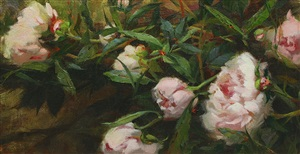 peony delight by carol arnold