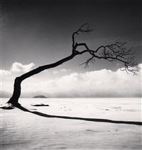 kussharo lake tree, study 10, kotan, hokkaido, japan by michael kenna