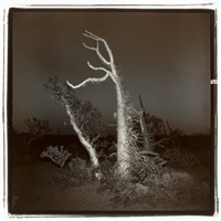 untitled (boojum tree #3) by richard misrach