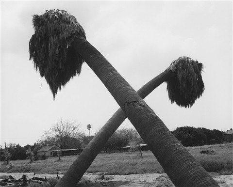 dead palms, partially uprooted, ontario, california by robert adams