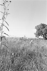 south of longmont, colorado by robert adams