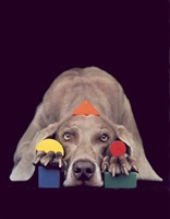 basic shapes in colour by william wegman