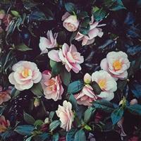 pink camellia, oregon by christopher burkett
