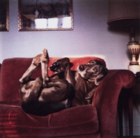 on mrs. wegman's couch by william wegman