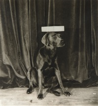 modeling school by william wegman