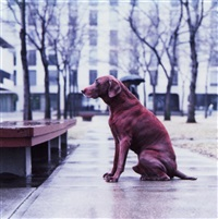 red dog by william wegman