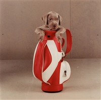 golfy by william wegman