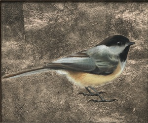 chickadee (sold) by anne mcgrory