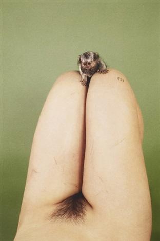 marmoset lsd by ryan mcginley