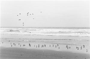 north beach peninsula, pacific county, washington by robert adams