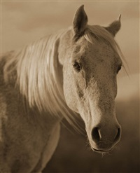 horse #2 by michael eastman