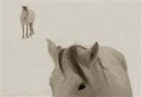 snow ponies #2, truchas, nm by jack spencer