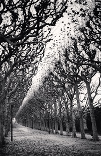 jardin des plantes, study 1, paris, france, 1988 by michael kenna
