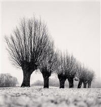 seven pollarded trees, chapaize, bourgogne, france, 1998 by michael kenna