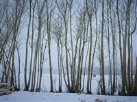 time taken 6, mid winter by simon norfolk