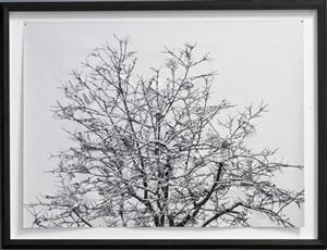 winter/no.02 by hubertus hamm
