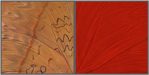 hide seek red glider by craig dennis and susan eder