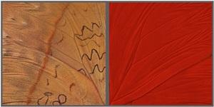 hide & seek (red glider) by craig dennis and susan eder