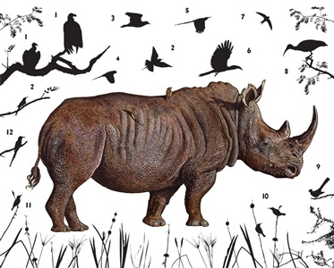 southern white rhinoceros zimbabwe by james prosek