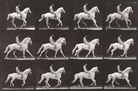 """clinton"" cantering, bareback; rider nude by eadweard muybridge"
