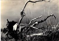 la casa e l'albero by mario giacomelli