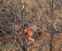 untitled (rape performance) by ana mendieta
