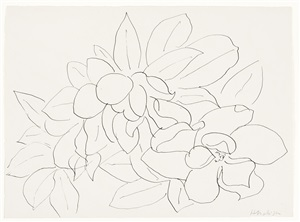 magnolia (fleurs et feuilles) study of flowers and leaves by henri matisse