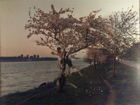 pink tree by justine kurland