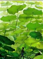 untitled by ruud van empel