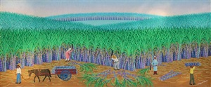 canavial (sugar cane field) by edgar calhado