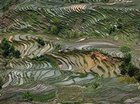 rice terraces #4, western yunnan province, china by edward burtynsky