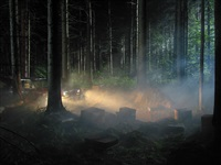 man in the woods # 5 by gregory crewdson