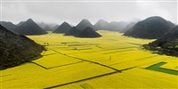 canola fields, luoping, yunnan province, china by edward burtynsky