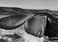 southern right whale, valdés peninsula, argentina by sebastião salgado