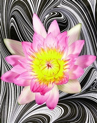 pucci's lavender water lily by christopher beane