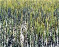 turkle pond, delaware by christopher burkett