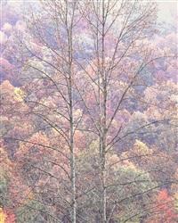 whitewood vista, west virginia by christopher burkett