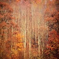 sunrise autumn forest and fog, west virginia by christopher burkett