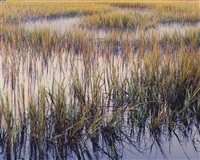 marsh grasses evening light, south carolina by christopher burkett