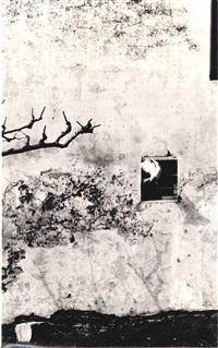 il piccione bianco by mario giacomelli