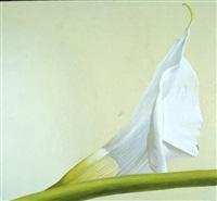 calla (2307 q) by fabio aguzzi